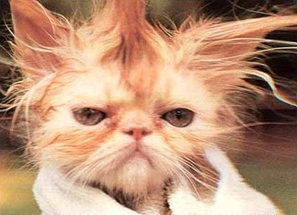 Bad Hair Day!