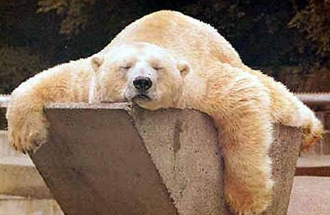 This is one tired bear!