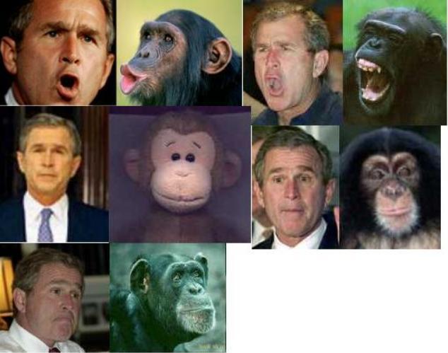 George W. Bush...or a monkey?
